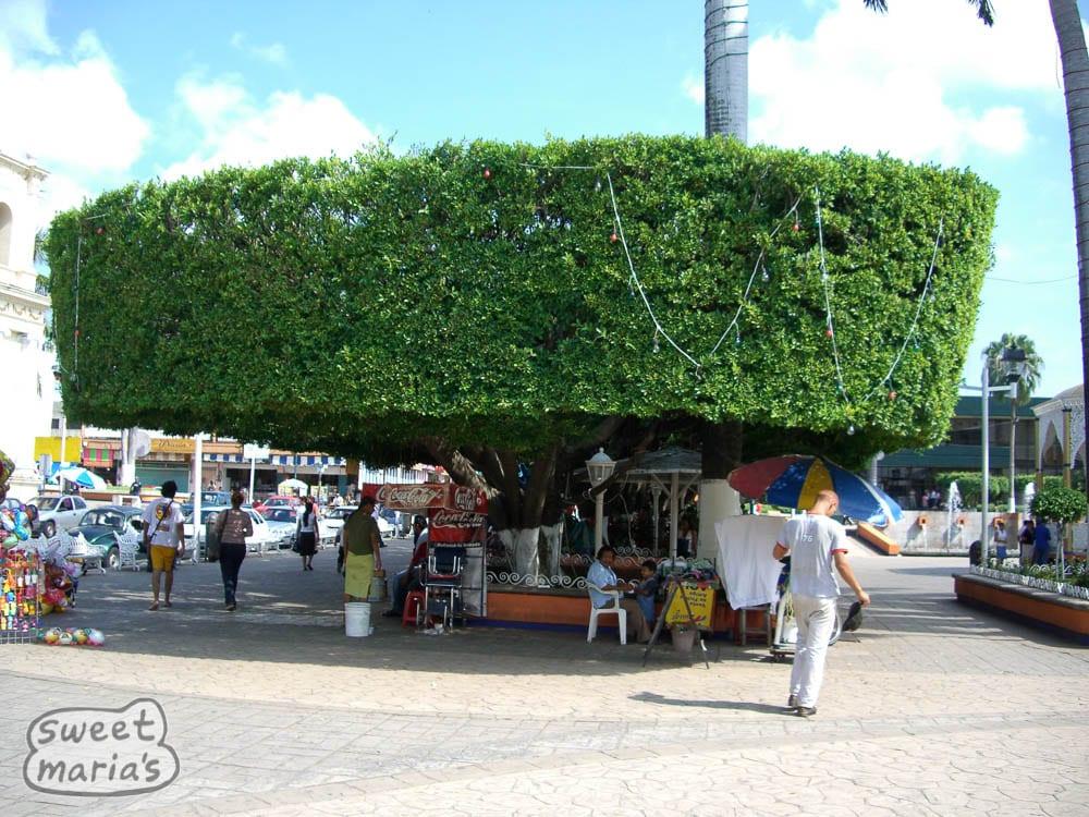 Mexico Chiapas Tapachula