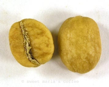 Single Coffee Bean Roast Image - Degree of Roast