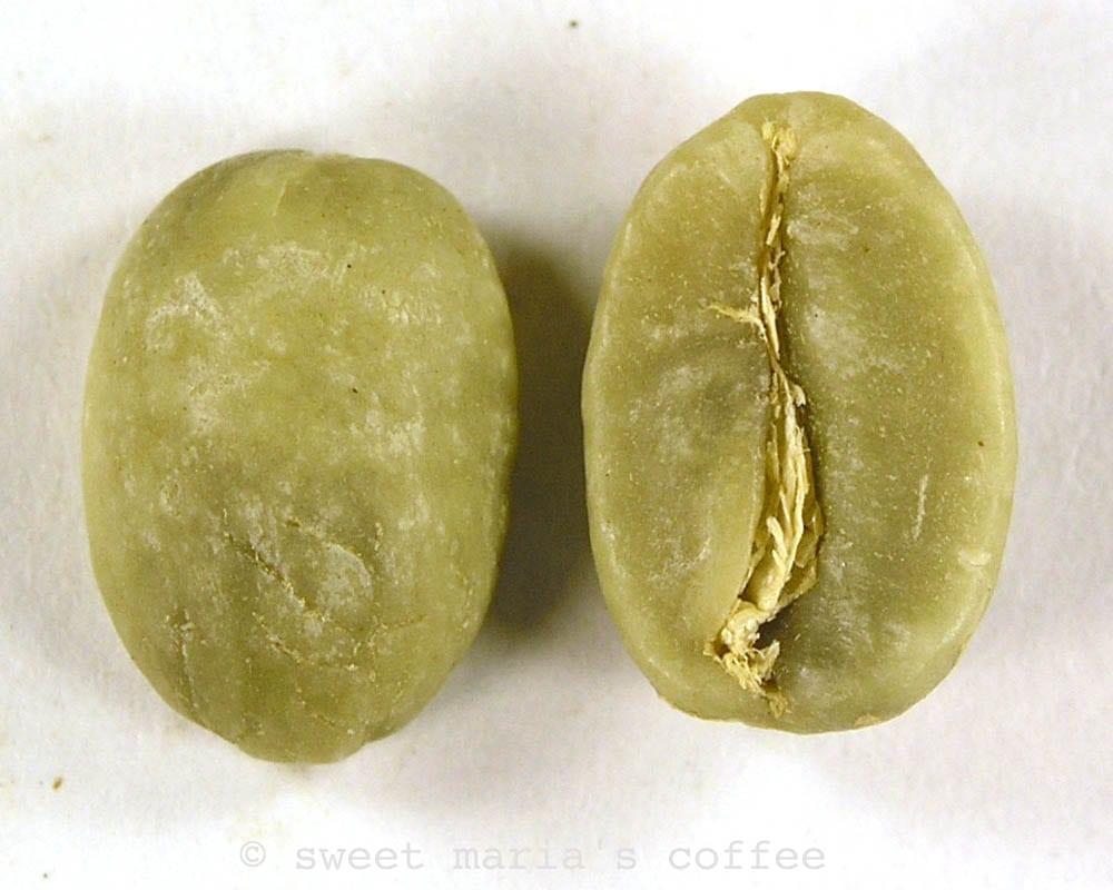green coffee macro image single bean