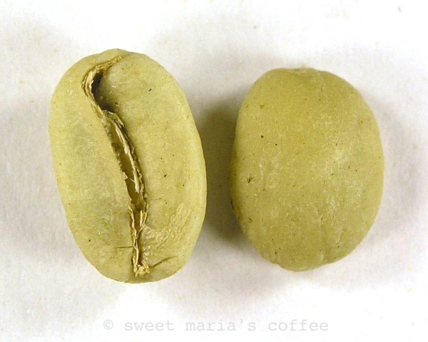 Coffee bean macro image yellowing stage of roasting