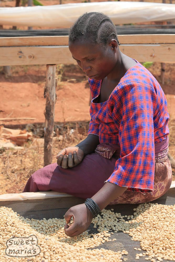 Hand sorting coffee on a genuine authentic african bed.