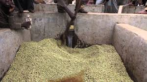 Ethiopian Coffee Processing