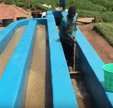 African Video Trio: Rwanda and Burundi Coffee Processing