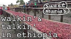 Video Travelogue - Walkin' and Talkin' in Shakiso Ethiopia
