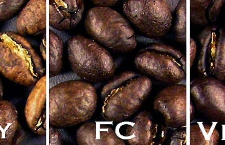 Costa Rica Peaberry 3 Roast Levels Surface Appearance of Coffee