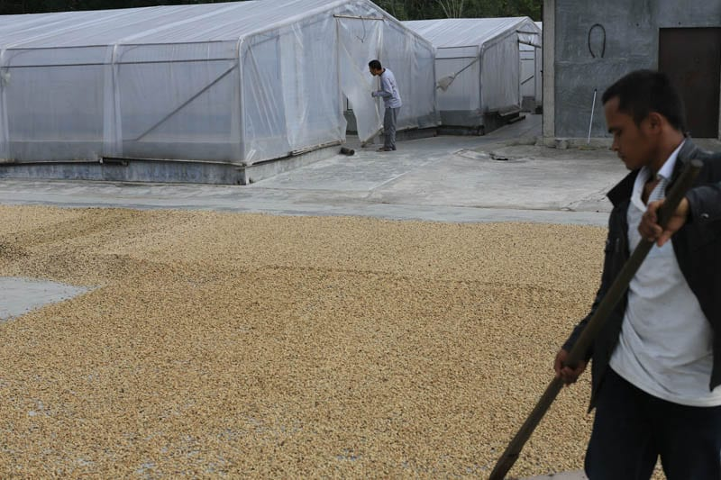 Better tasting and more stable coffees will result from better drying methods - here a coffee collector has built covered drying while still using exposed patios when the weather is good.