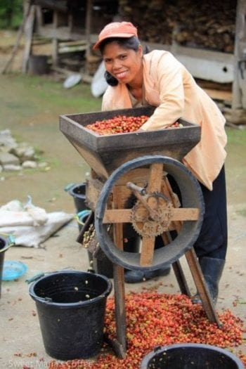 Ibu Manurund depulps coffee cherry from the day's harvest at her home in North Toba region, Sumatra.