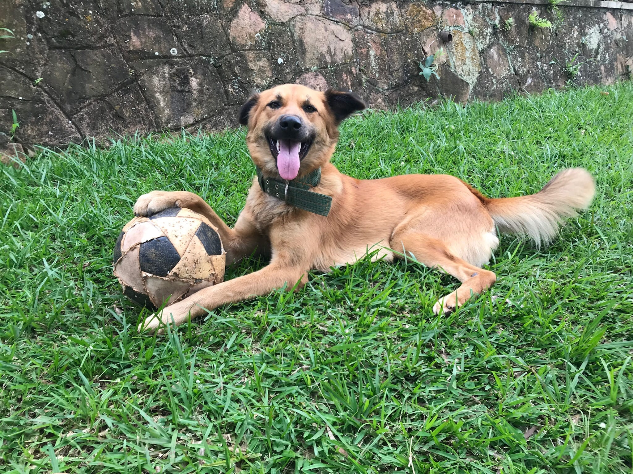 Lupa the soccer dog in Kampala, a formidable defender