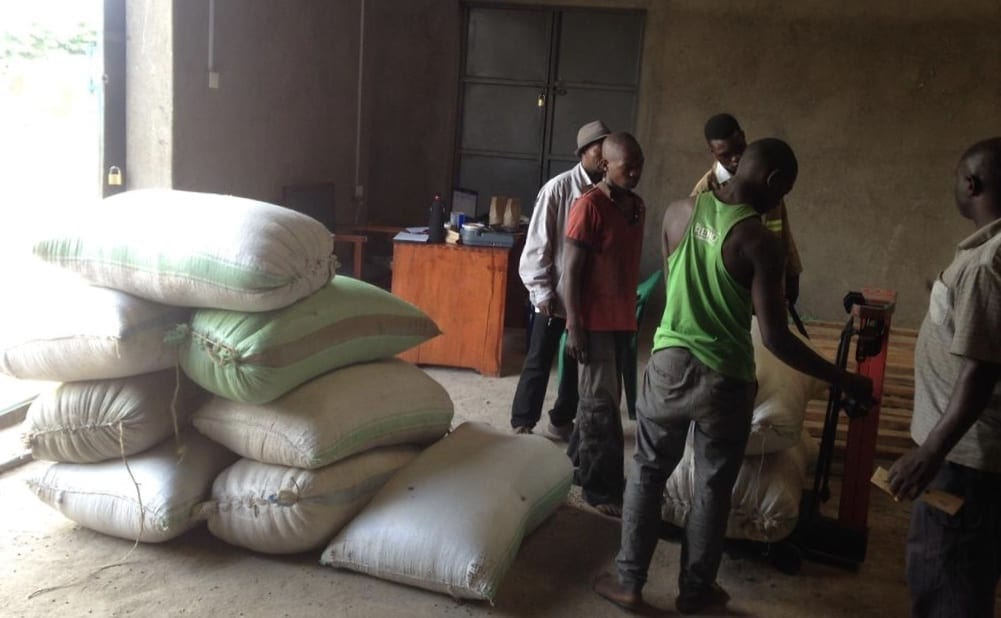 Loading kiboko coffee, which are dried natural pods