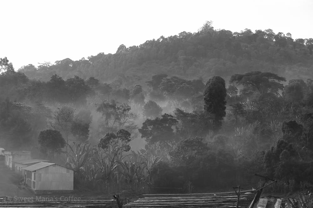 We had more than a few nights on this trip camping at washing stations. It may not be the Hilton, but it's amazing to wake up right at the farm in the morning and see views like this. Any more in mist is typical in the coffee forests.