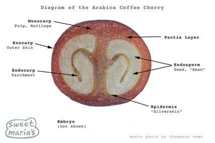 Layers of the Arabica Coffee Cherry, diagram, Sweet Marias Coffee