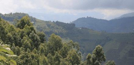 Rwanda and Burundi is Undervalued Among East African Coffee Sources