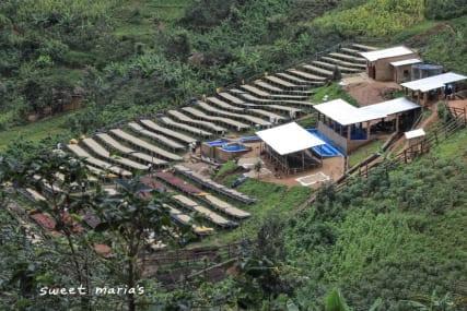 Rwanda + Burundi Coffee Fundamentals
