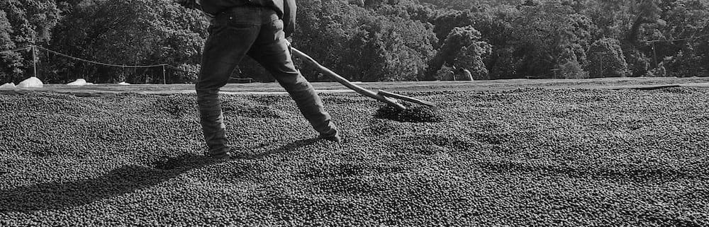 Raking natural coffee at the Guji Highland processing facility in Shakiso