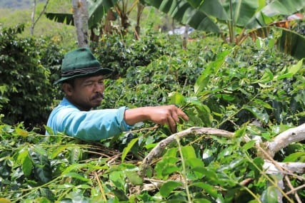 Sumatra: Some Things I Have Learned About Aceh Gayo Coffee, Perhaps.