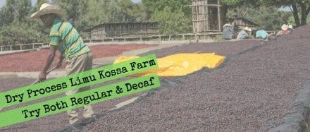 Ethiopia Organic Dry Process Two Ways: Regular vs. Decaf