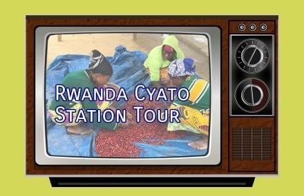 Video: Rwanda Coffee Processing at Cyato Station