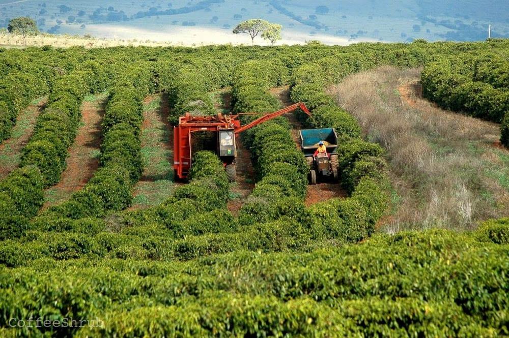 Brazil Coffee Farm