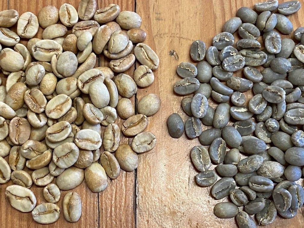 monsooned coffee