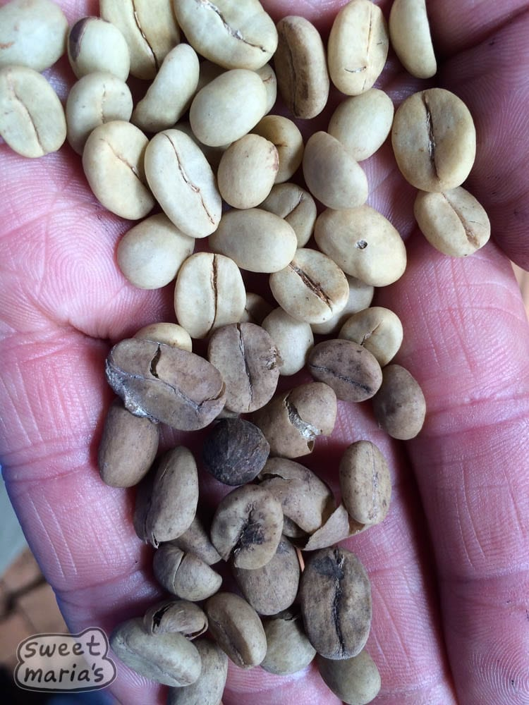 Clean Vs Nasty coffee in Congo