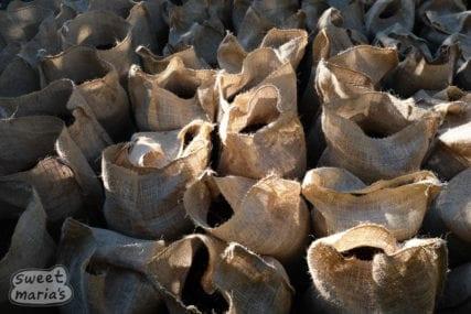 Jute bags of Coffee in parchment El Salvador