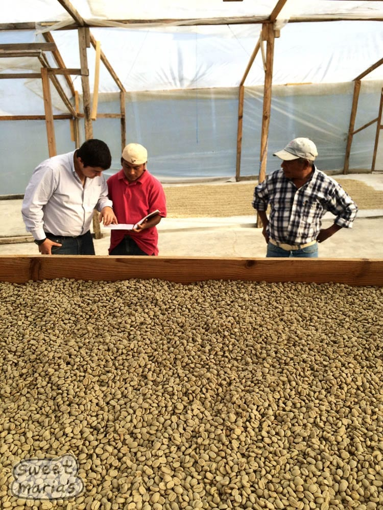 Guatemala Coffee: Sweet Maria's Proyecto Xinabajul