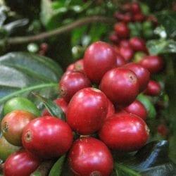 Nicaragua Coffee Farm Visits, Matagalpa