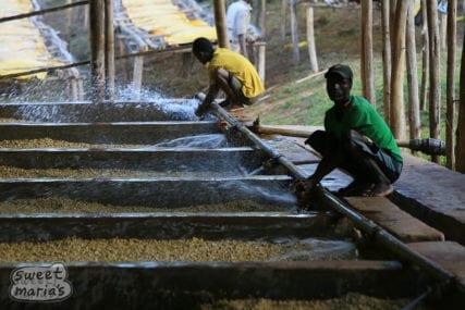 Fermentation Tanks Wet-Process coffee Ethiopia