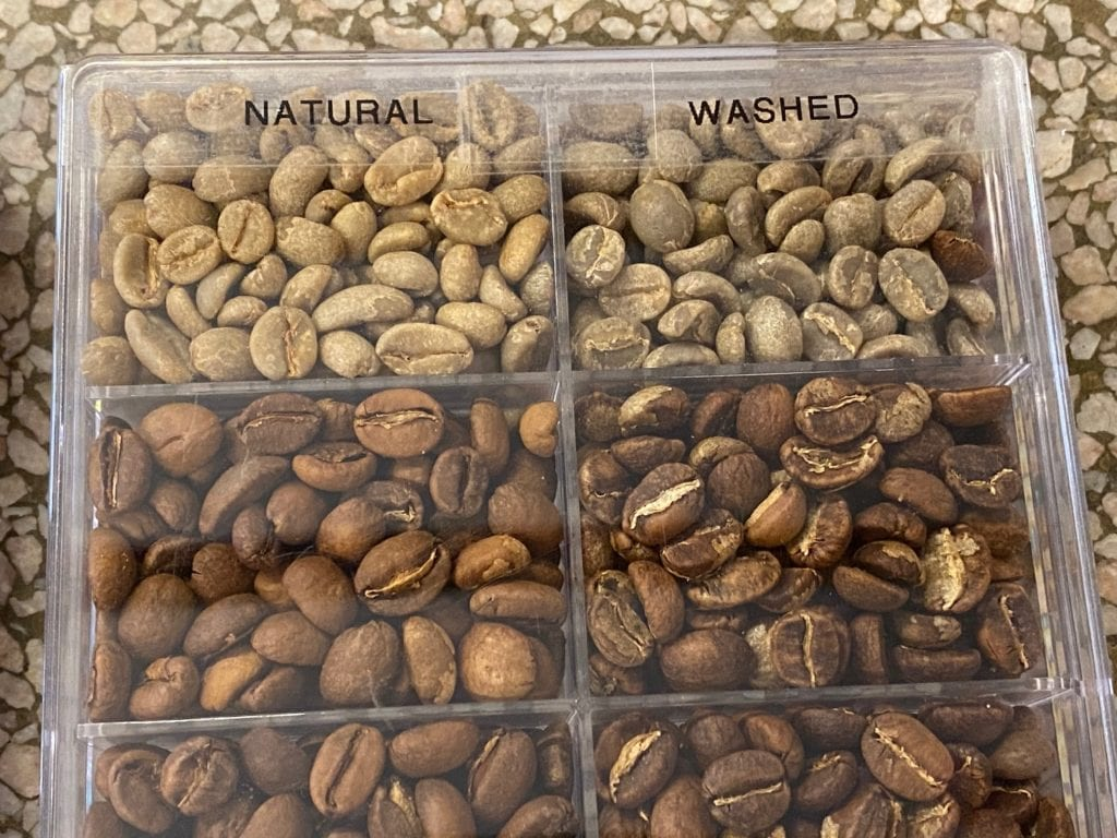 Dry-processed coffee versus wet-process coffee display  comparing degree of roast levels from Green to FC+