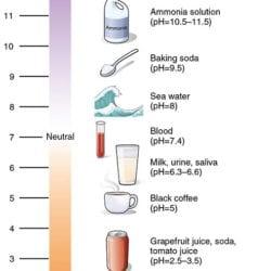 acidity scale