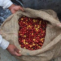 Coffee Farms as Brand Names