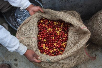 Walter Penna Coffee Cherry Cauca Colombia Sweet Marias