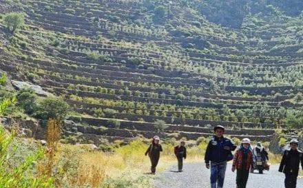 Yemen coffee terraces