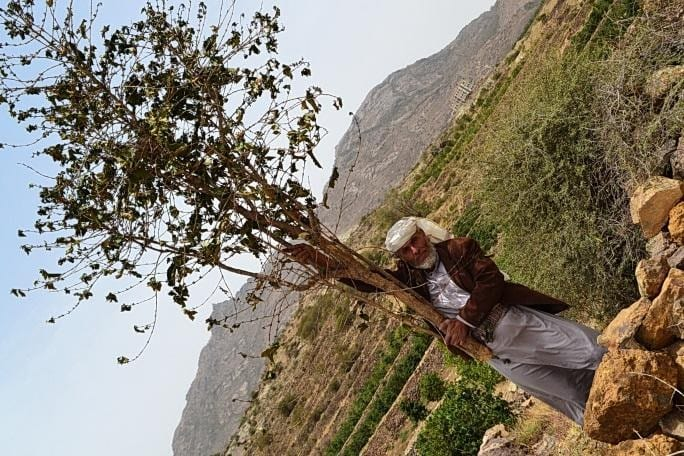 Yemen coffee farmer - photo from Pearl of Tehama