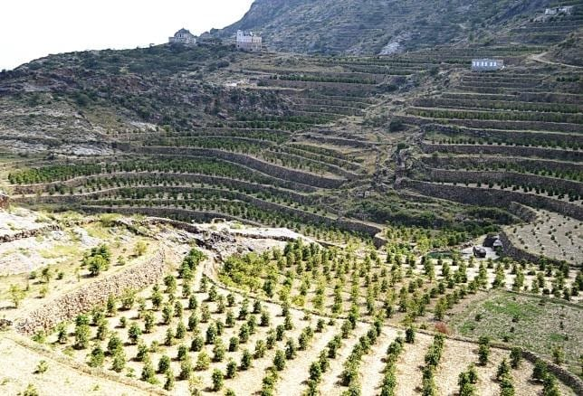 Yemen coffee farming terraces - photo from Pearl of Tehama