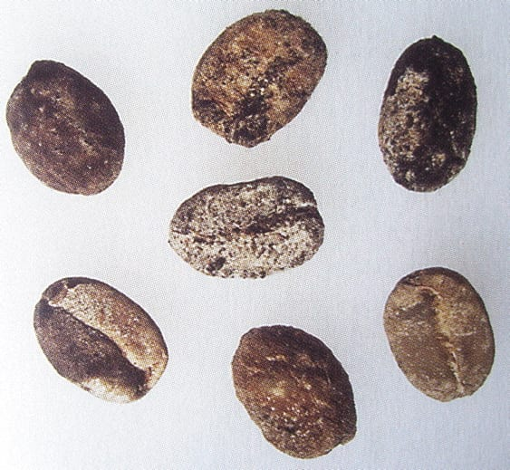 Moldy coffee beans, usually a storage damage issue.