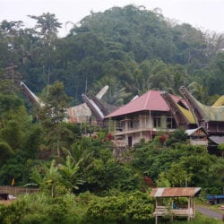 Sulawesi Toraja Travels: What can you do in 3 days flat?