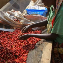 Burundi Coffee Farm Visits