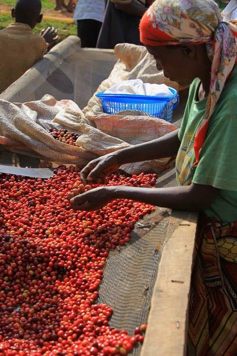 Burundi Coffee Farm Visits