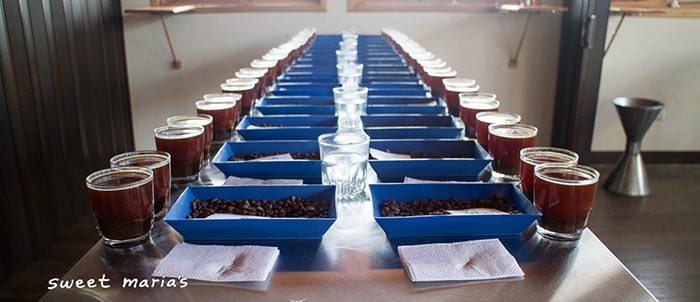 Evaluating several cups of coffee through cup testing and inspecting the physical quality of the roasted coffee beans.