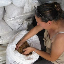 Francesca shows us the different types of Miel coffee. Costa Rica