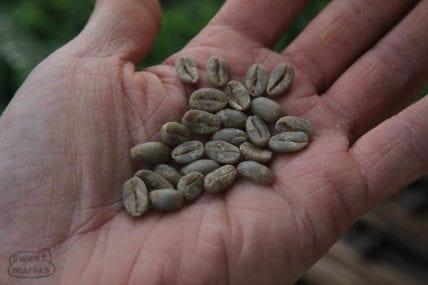 Java green coffee in Sunda area, Java coffee trek 2010