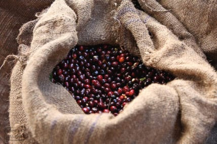 Ethiopia Harvest Trek in December