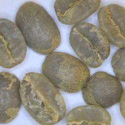 green coffee sweet marias coffee shrub