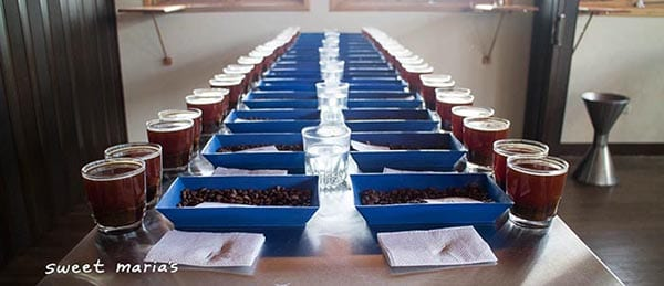A full table of green coffee samples, all roasted and ready to cup. Antigua, Guatemala.