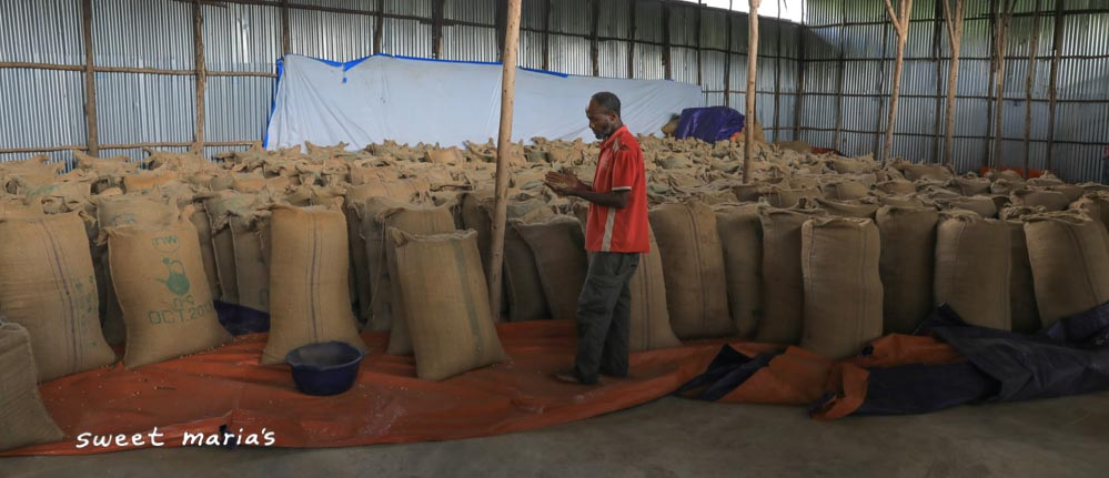 Jute bags filled with green coffee in the storage facility at the Ayetu private mill in Gera, Oromia region of Ethiopia